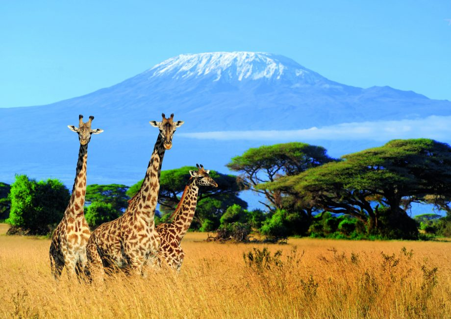 Ecotourism hotspots in Tanzania include wildlife safari National parks and Kilimanjaro trails Lemosho